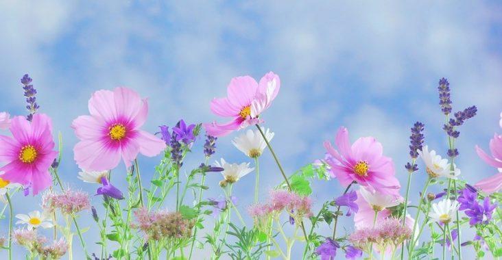 Vackra trädgårdar är en fröjd för ögat
